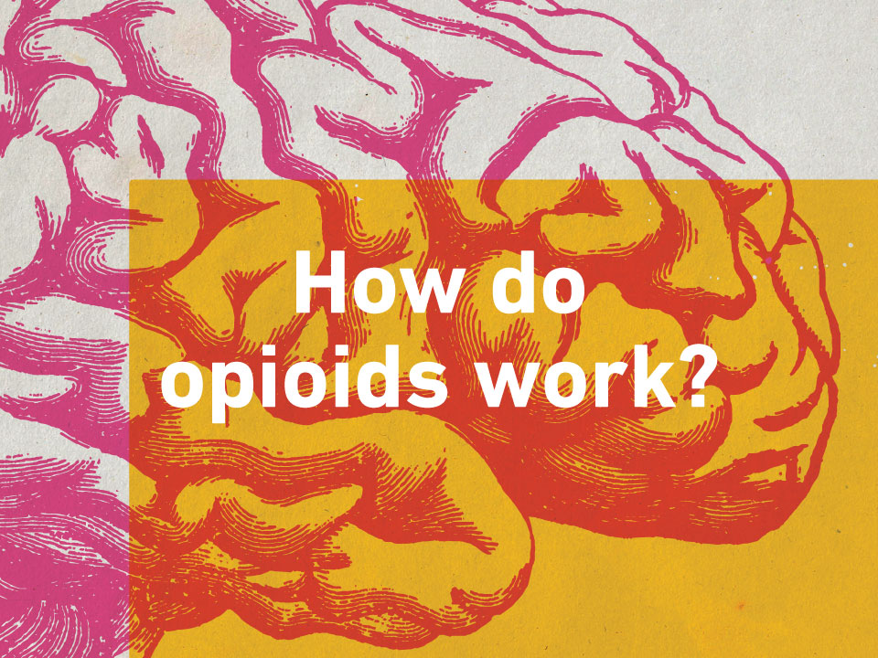 How Do Opioids Work?